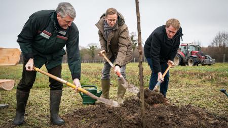 Drei Männer pflanzen einen Baum.