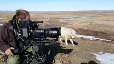 Filmaufnahmen Polarwölfe