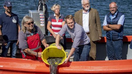 Ministerpräsident Daniel Günther steht mit mehreren Personen auf einem kleinen Boot und gießt einen Eimer voller Aale ins Wasser.