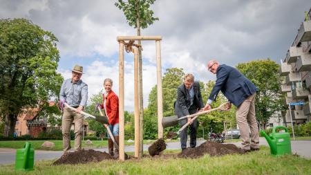 Ministerpräsident Daniel Günther und drei Vertreter:innen der Grünen Verbände pflanzen eine Linde.